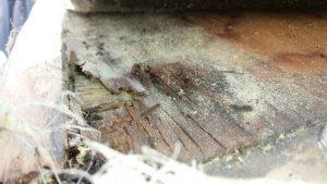 奈良県橿原市K様 雨漏り修理 瓦めくり4